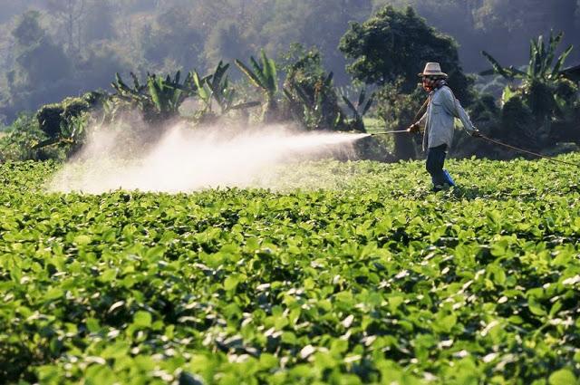 Środki ochrony roślin - naturalne i chemiczne